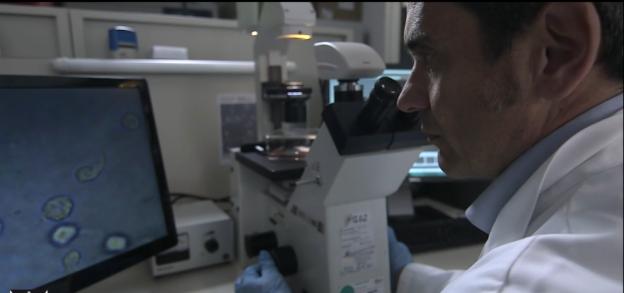 menarini ricerca oncologica