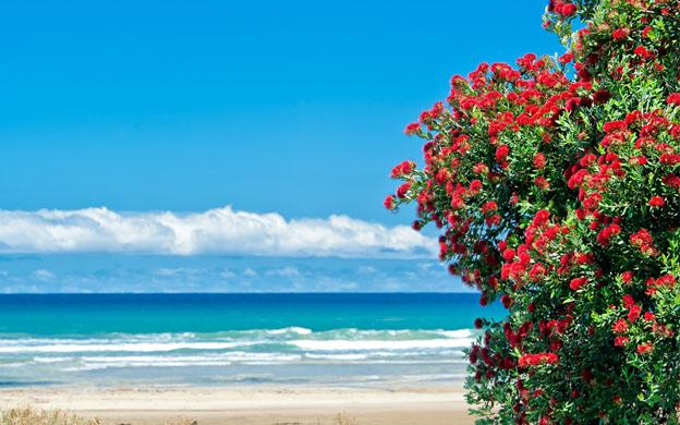 sedi menarini Nuova Zelanda